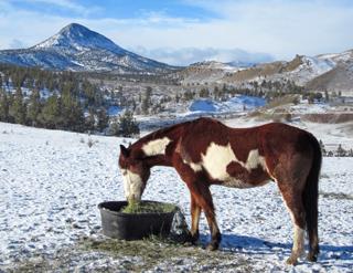 Horse in snow